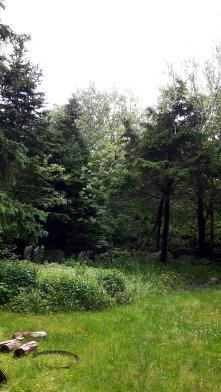 Variety of mature trees
